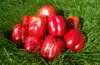 Семена Перца сладкий Кубовидный Ред Барон F1