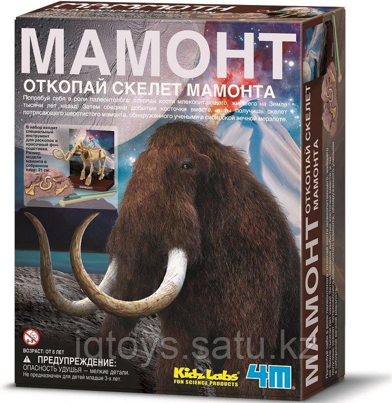 4M Скелет Мамонта