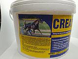 Creatine plus энергетическая кормовая добавка для лошадей. 900гр, фото 2