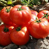 Семена Томатов для открытого грунта  (детерминантные) Садин F1