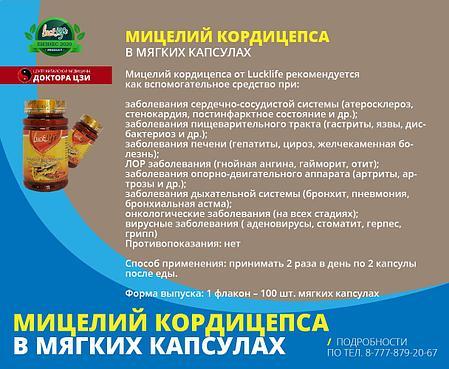 МИЦЕЛИЙ КОРДИЦЕПСА, фото 2