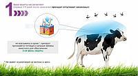 Защита коров от кровососущих насекомых в летний период