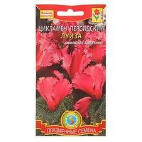 Семена комнатных цветов Цикламен персидский 'Луиза', Мн., 3 шт (комплект из 10 шт.)