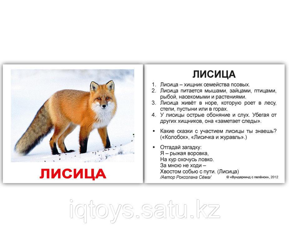 Комплект карточек Wild animals/Дикие животные