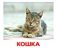 Комплект карточек Домашние животные