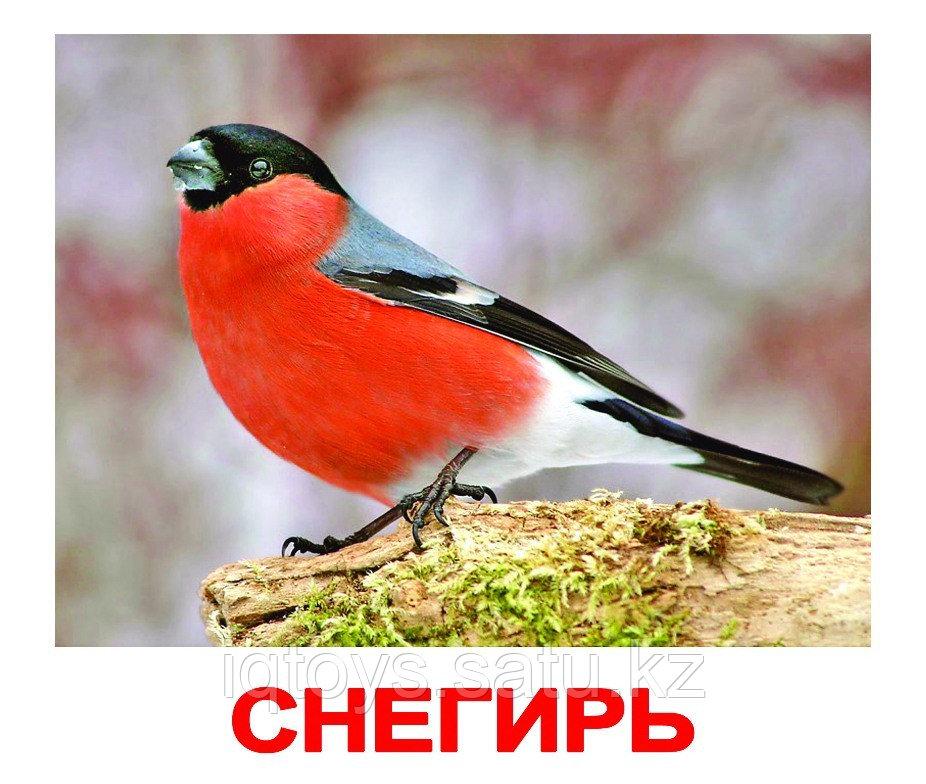 Комплект карточек Птицы