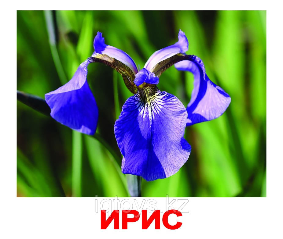 Комплект карточек Цветы