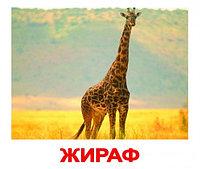 Комплект карточек Дикие животные