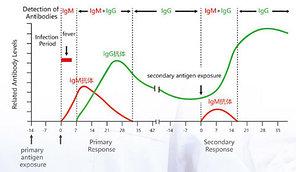 Экспресс-тест на вирусы, фото 2