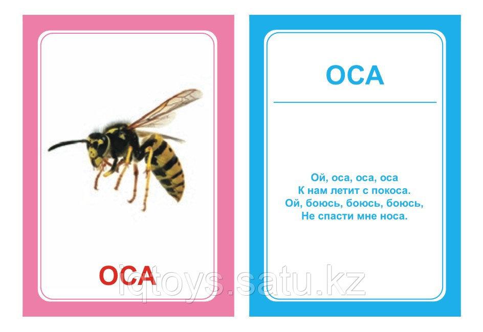 Комплект карточек Логопедка С
