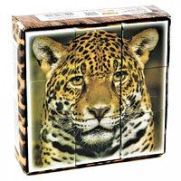 Кубики пластмассовые «Дикие кошки», 9 штук