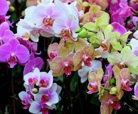 """Картины стразами на подрамнике """"Орхидеи"""" 30х40 см  СТРАЗЫ КРУГЛЫЕ"""