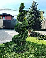 Живая изгородь и топиарная стрижка