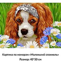 "Картина по номерам ""Собачка"" 50*40"
