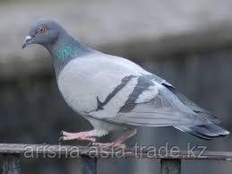 Защита от птиц на плодоягодных объектах.