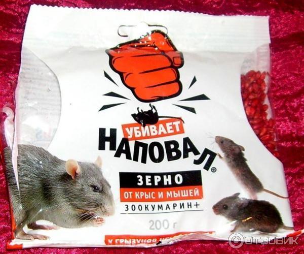 От крыс и мышей - Зерно наповал