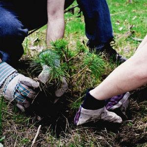 услуги посадки деревьев-саженцев и кустарников