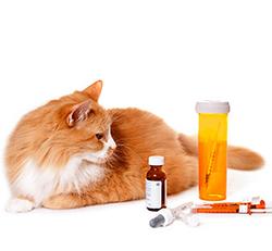 Вет препараты для животных