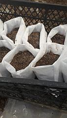 Пакеты для рассады. 15 см*25 см. Пакеты для рассады и растений из спандбонда. Гроубэг.