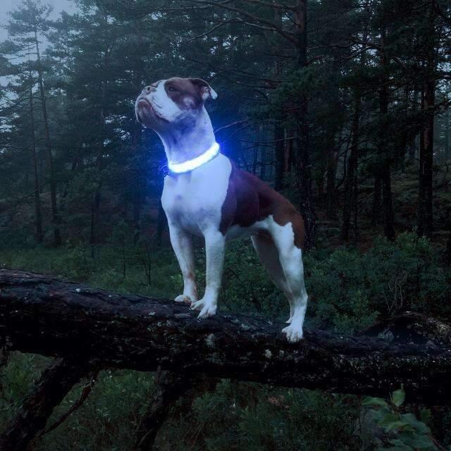 Светодиодный ошейник для собак usb размер M