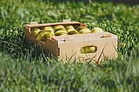 Коробки для яблок Алматы 432*282*140