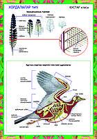Плакаты Зоология, фото 1