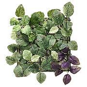 ФЕЙКА Растение искусственное, настенный, д/дома/улицы зеленый/сиреневый, 26x26 см