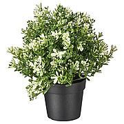 ФЕЙКА Искусственное растение в горшке, чабрец, 9 см