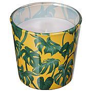 АВЛОНГ Неароматич свеча в стекл подсвечн, Монстера, лист зеленый, 7.5 см