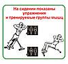 Скамья для пресса и мышц спины 120 кг Россия, фото 4