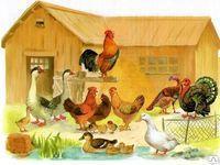 Полезные бактерии для домашних птиц
