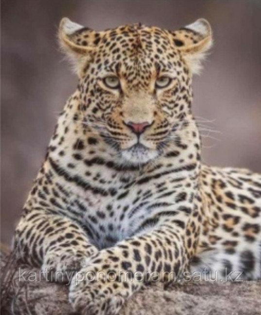 """Картина стразами на подрамнике (40х50 см) """"Леопард"""" MB-659"""