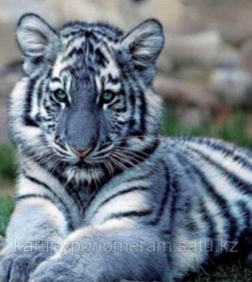 "Картина стразами на подрамнике (40х50 см) ""Белый тигрёнок"" MB-640"