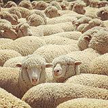 Одеяло из овечьей шерсти «Астра», фото 2