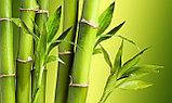 Одеяло из бамбука «Астра», фото 2