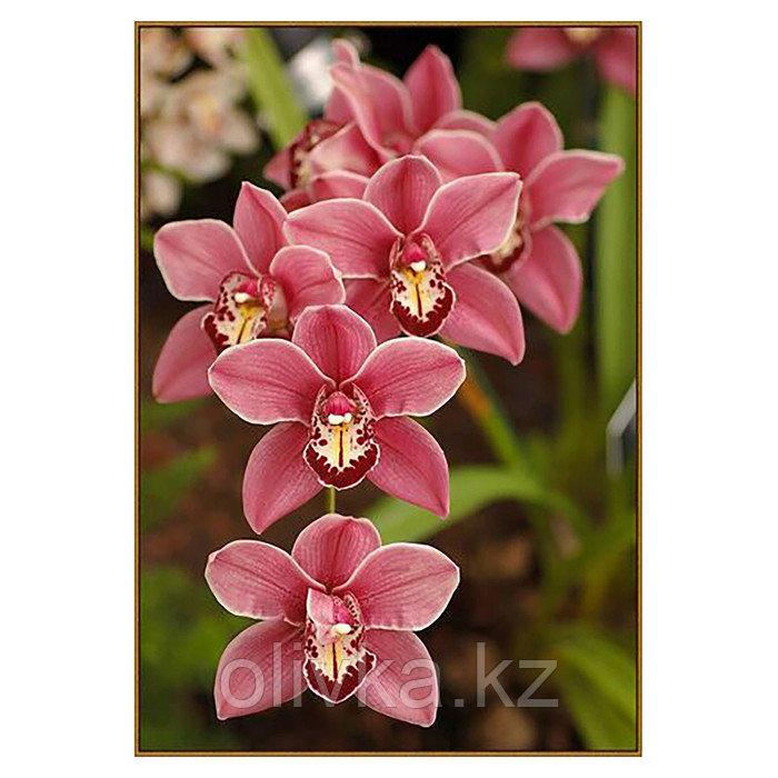 Алмазная мозаика «Дикая орхидея», 32 цвета