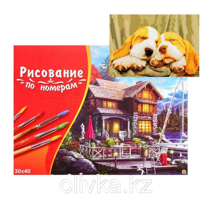 Картина по номерам на холсте 30 × 40 см, «Спящие щенята»