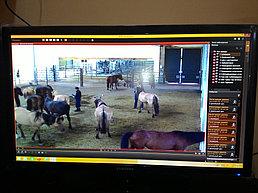 Система IP видеонаблюдения и автоматической пожарной сигнализации на заводе по производству порошка из кобыльего молока 1
