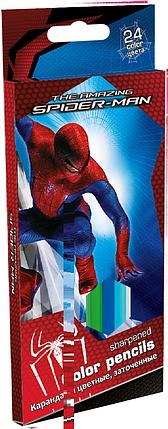 Карандаши, 24 цв. Spider-man, фото 2