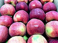 Яблоко красное гала 1 кг