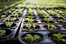 Выращивание рассады под заказ, для теплиц и оранжерей.