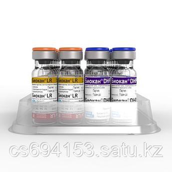 Биокан DHPPI+LR: вакцина для профилактики чумы, аденовироза, инфекционного гепатита и других заболеваний собак