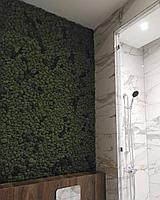 Фитостена. Озеленение ванных комнат