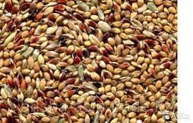 """Семена """"Суданка"""""""