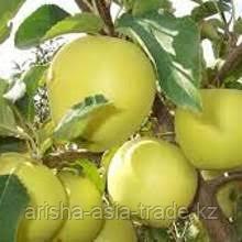Свежие яблоки.