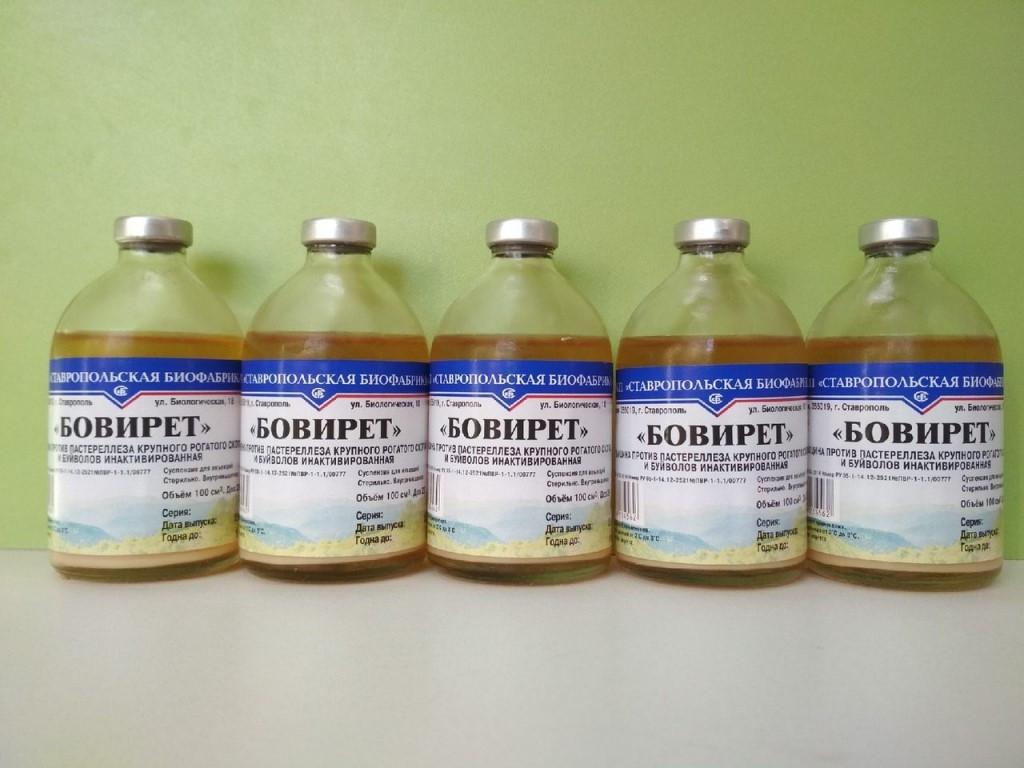 Вакцина против пастереллеза крупного рогатого скота ибуйволов инактивированная «Бовирет»