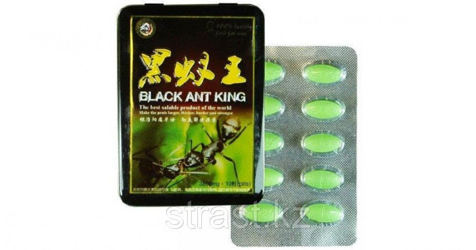 Муравей черный (Black ant king)