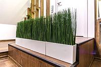 Натуральная трава Жинериум