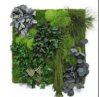Композиции из стабилизированных растений