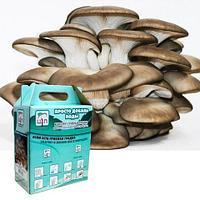 Комплект для выращивания грибов дома «Просто добавь воды» от Центра Экологических Программ (Вешенка)